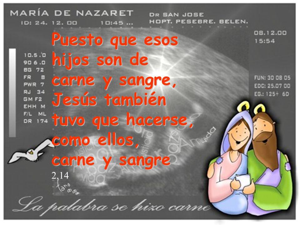 Puesto que esos hijos son de carne y sangre, Jesús también tuvo que hacerse, como ellos, carne y sangre 2,14