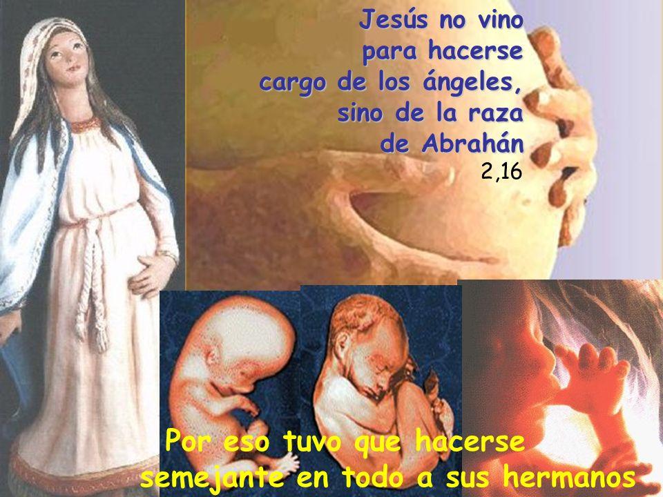 Jesús no vino para hacerse cargo de los ángeles, sino de la raza de Abrahán 2,16 Por eso tuvo que hacerse semejante en todo a sus hermanos