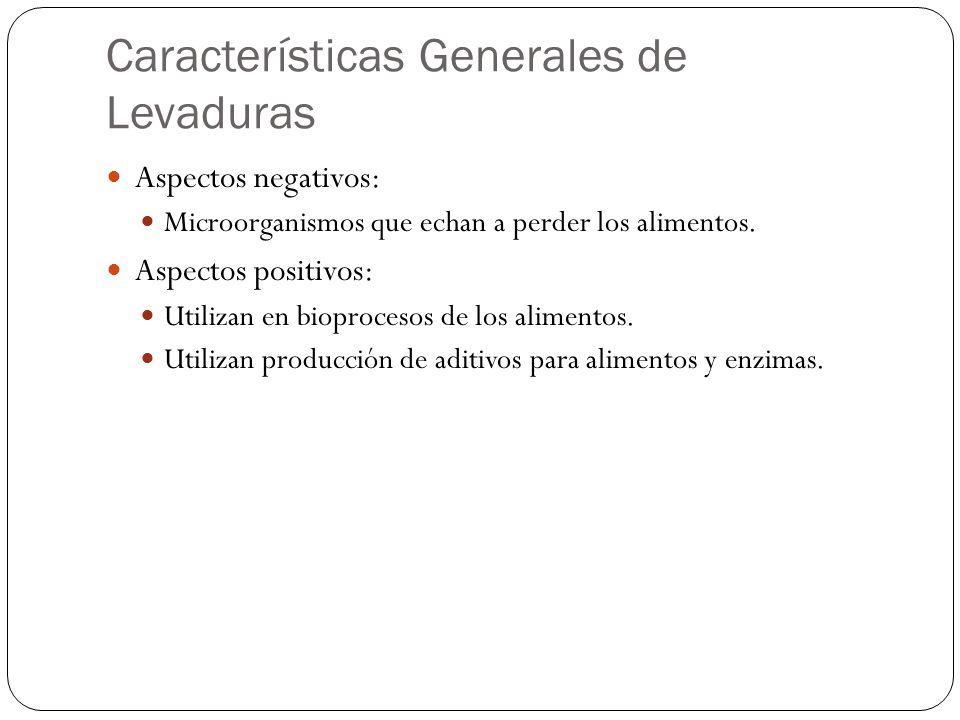 Características Generales de Levaduras Aspectos negativos: Microorganismos que echan a perder los alimentos. Aspectos positivos: Utilizan en bioproces