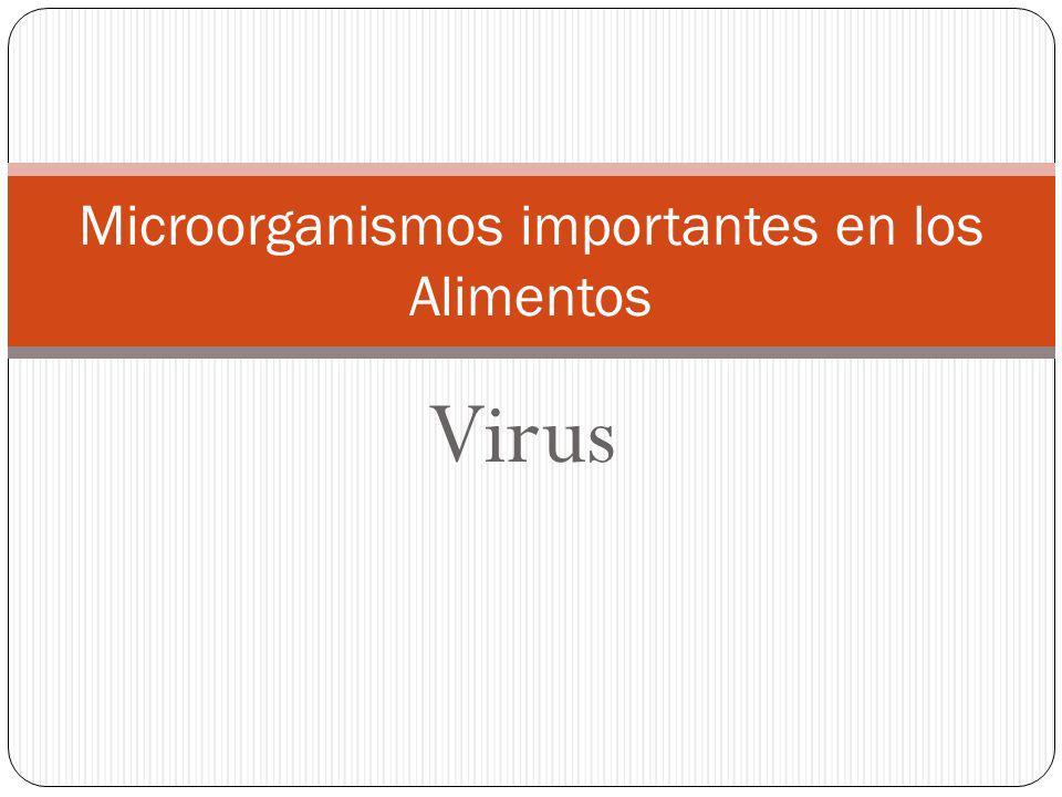 Virus Microorganismos importantes en los Alimentos