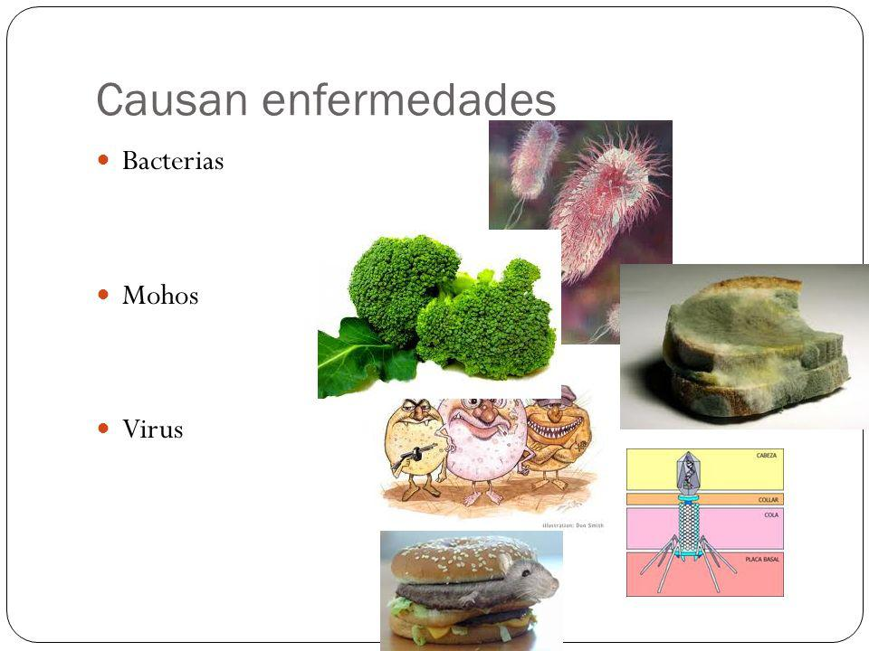 Causan enfermedades Bacterias Mohos Virus