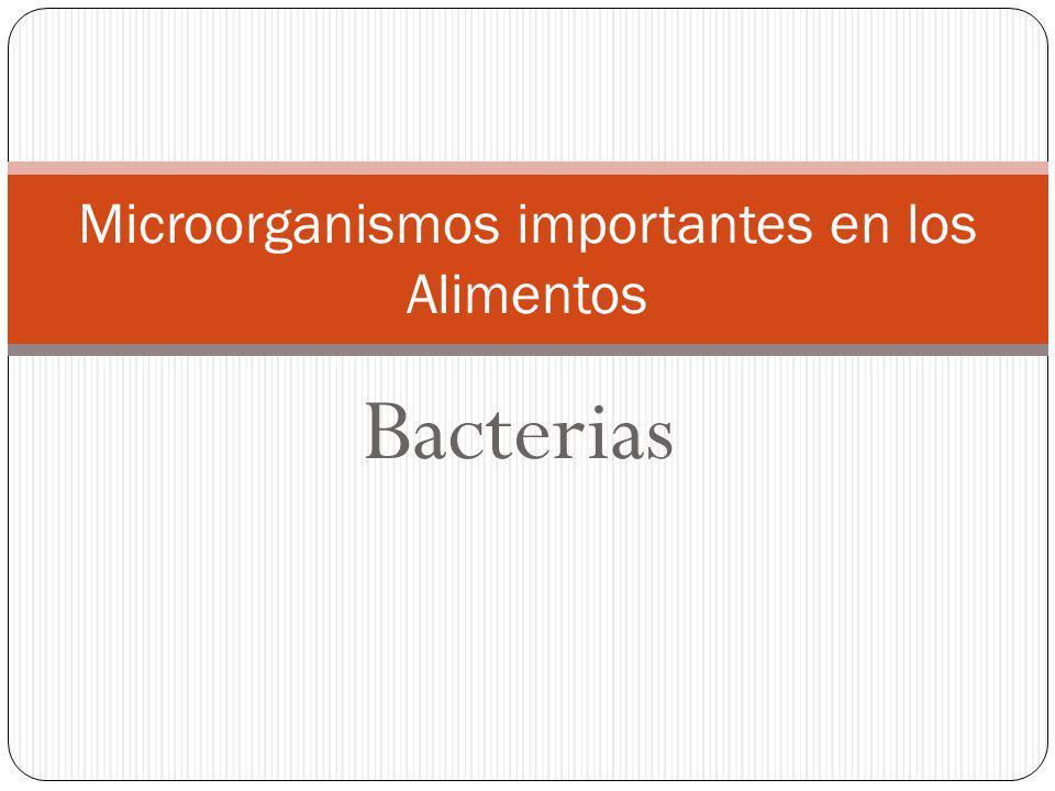 Bacterias Microorganismos importantes en los Alimentos