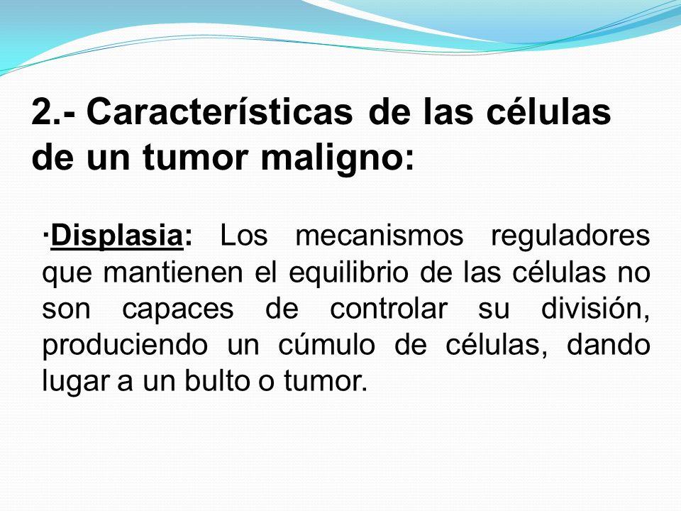 2.- Características de las células de un tumor maligno: Displasia: Los mecanismos reguladores que mantienen el equilibrio de las células no son capace