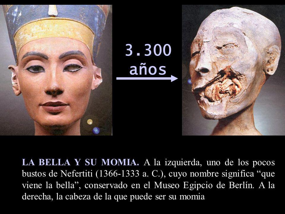 3.300 años LA BELLA Y SU MOMIA. A la izquierda, uno de los pocos bustos de Nefertiti (1366-1333 a. C.), cuyo nombre significa que viene la bella, cons