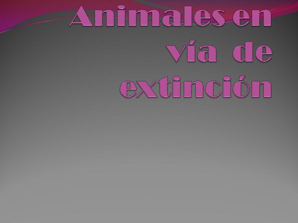 En términos biológicos, se considera a la extinción como un fenómeno completamente natural resultado de un proceso en el que una especie se origina a partir de otra -la que se extingue-, lo cual ocurre generalmente en el lapso de varios miles o varios cientos de miles de años.