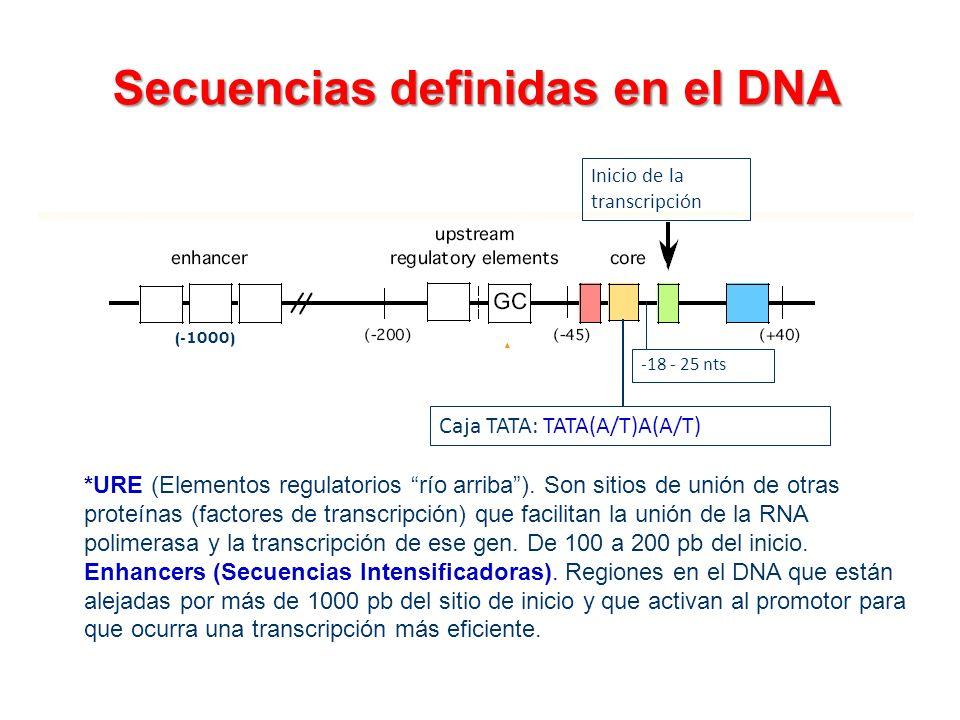 Secuencias definidas en el DNA *URE (Elementos regulatorios río arriba). Son sitios de unión de otras proteínas (factores de transcripción) que facili