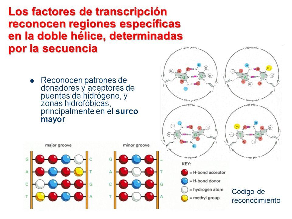 Los factores de transcripción reconocen regiones específicas en la doble hélice, determinadas por la secuencia Reconocen patrones de donadores y acept