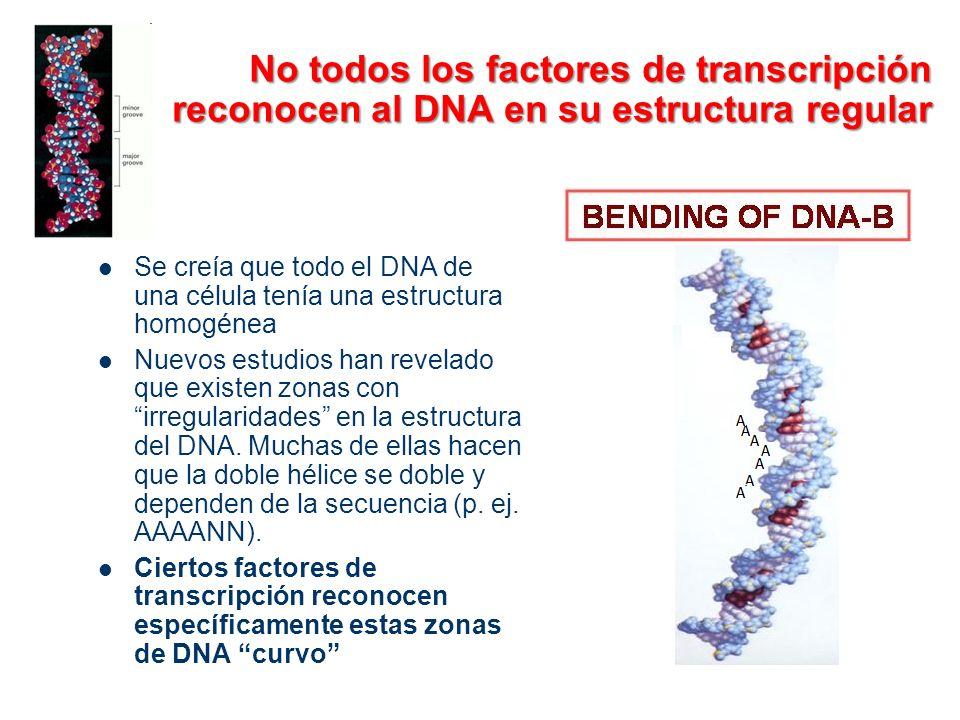 No todos los factores de transcripción reconocen al DNA en su estructura regular Se creía que todo el DNA de una célula tenía una estructura homogénea