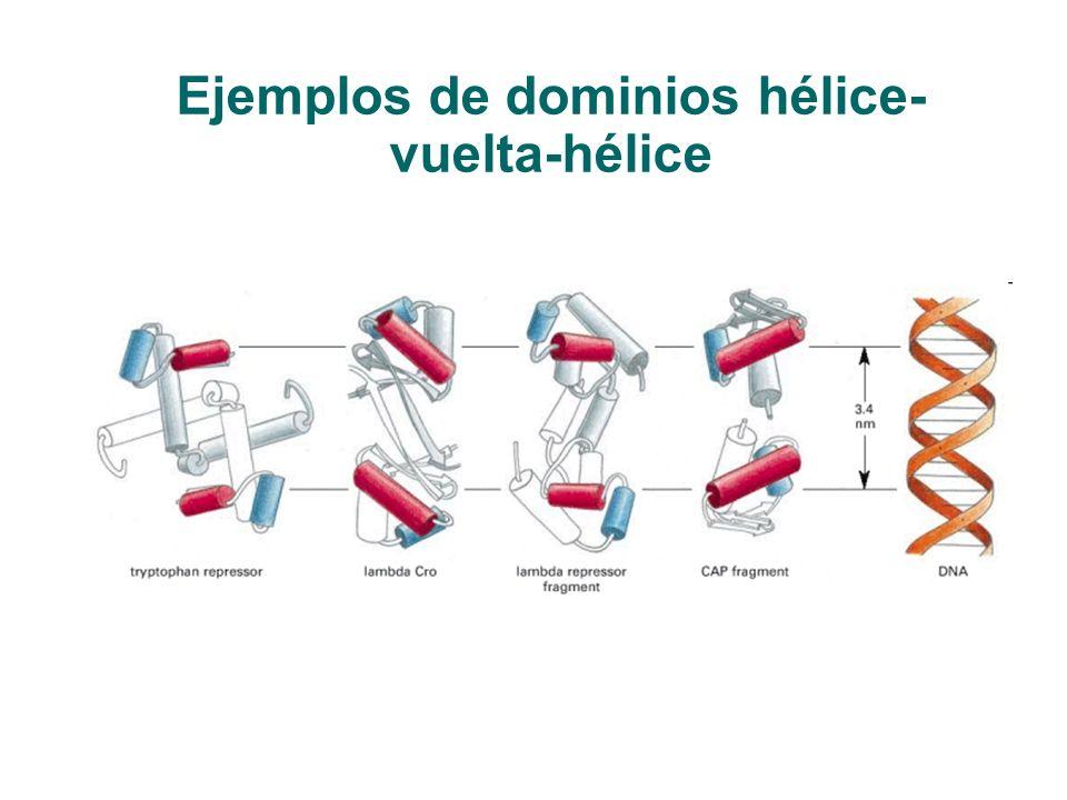 Ejemplos de dominios hélice- vuelta-hélice