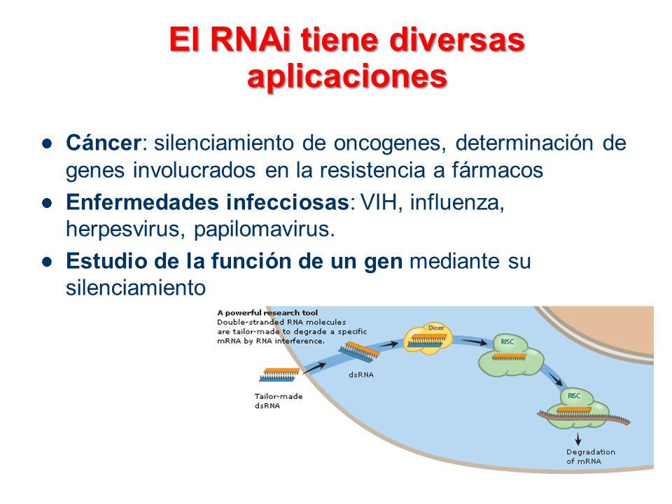 El RNAi tiene diversas aplicaciones Cáncer: silenciamiento de oncogenes, determinación de genes involucrados en la resistencia a fármacos Enfermedades