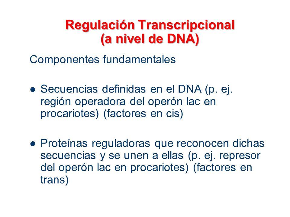 Regulación Transcripcional (a nivel de DNA) Componentes fundamentales Secuencias definidas en el DNA (p. ej. región operadora del operón lac en procar