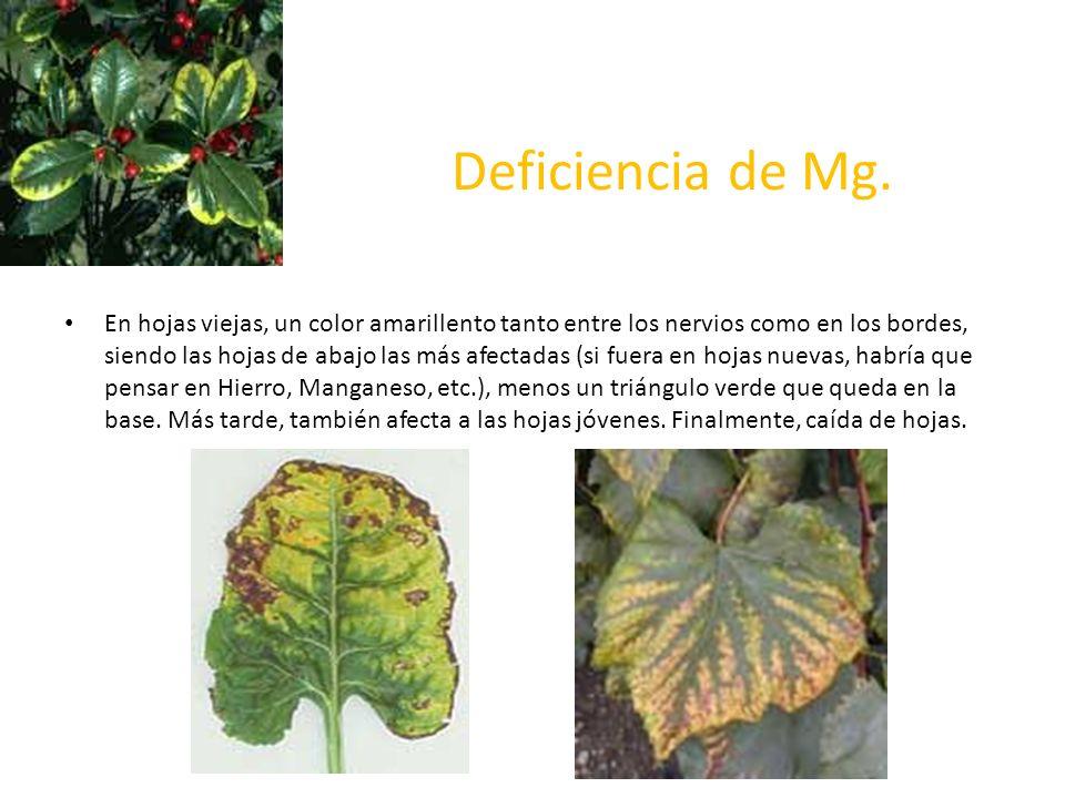 Deficiencia de Mg.