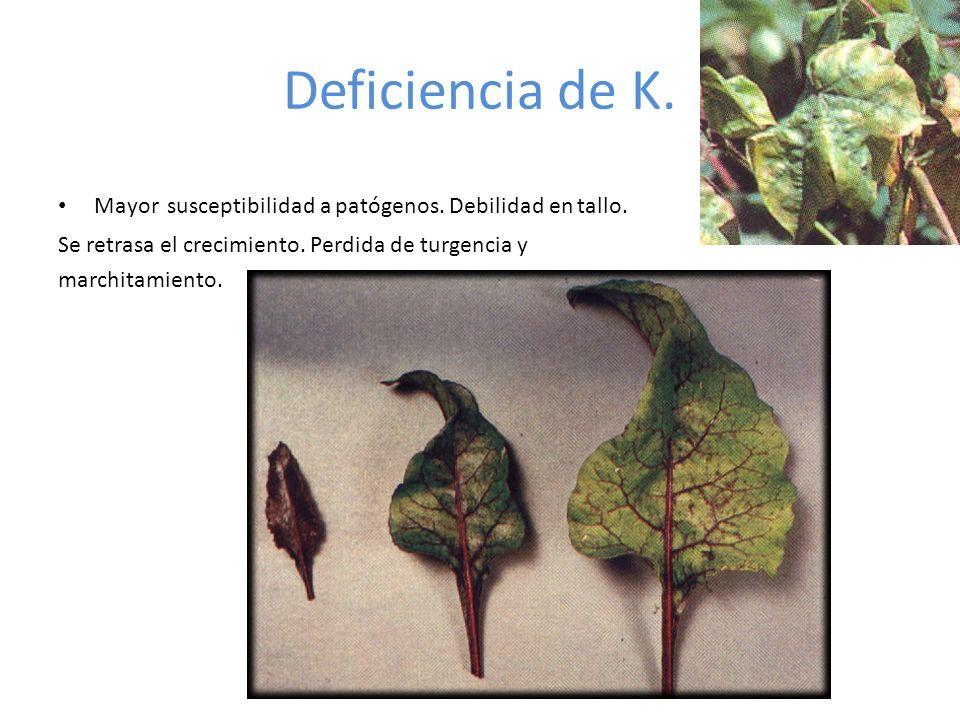 Deficiencia de K.Mayor susceptibilidad a patógenos.