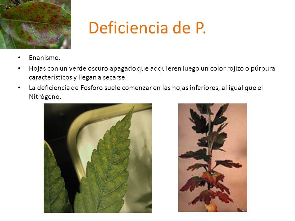 Deficiencia de P.Enanismo.