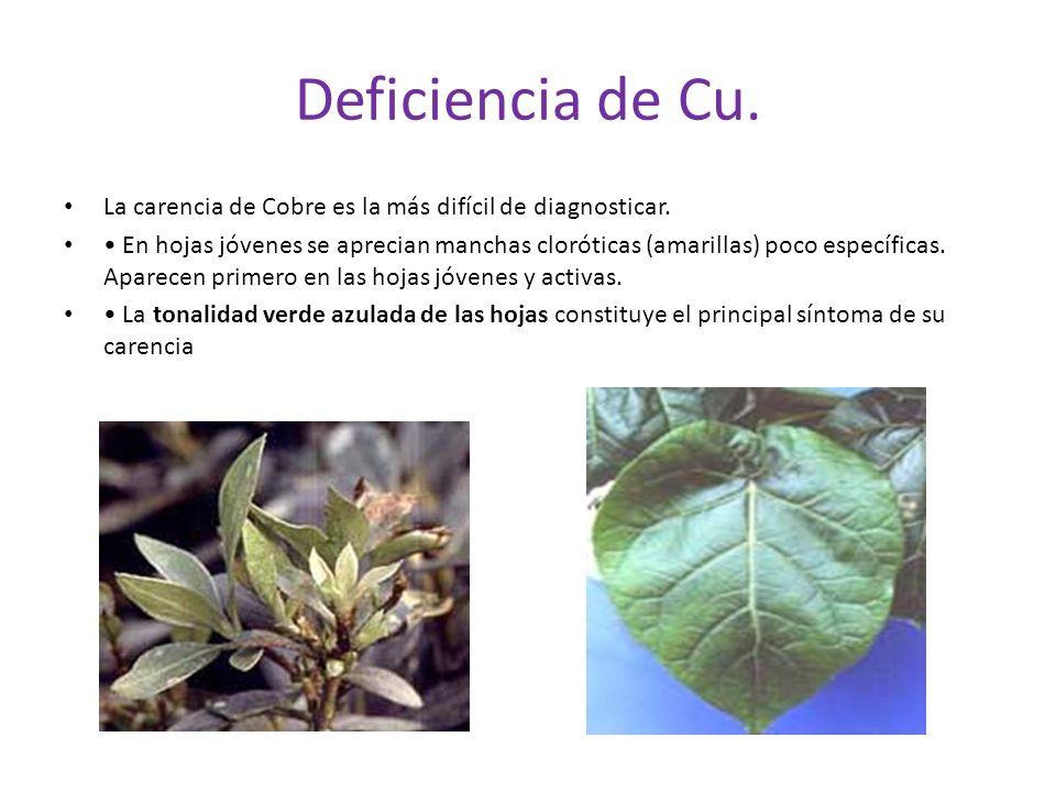 Deficiencia de Cu.La carencia de Cobre es la más difícil de diagnosticar.