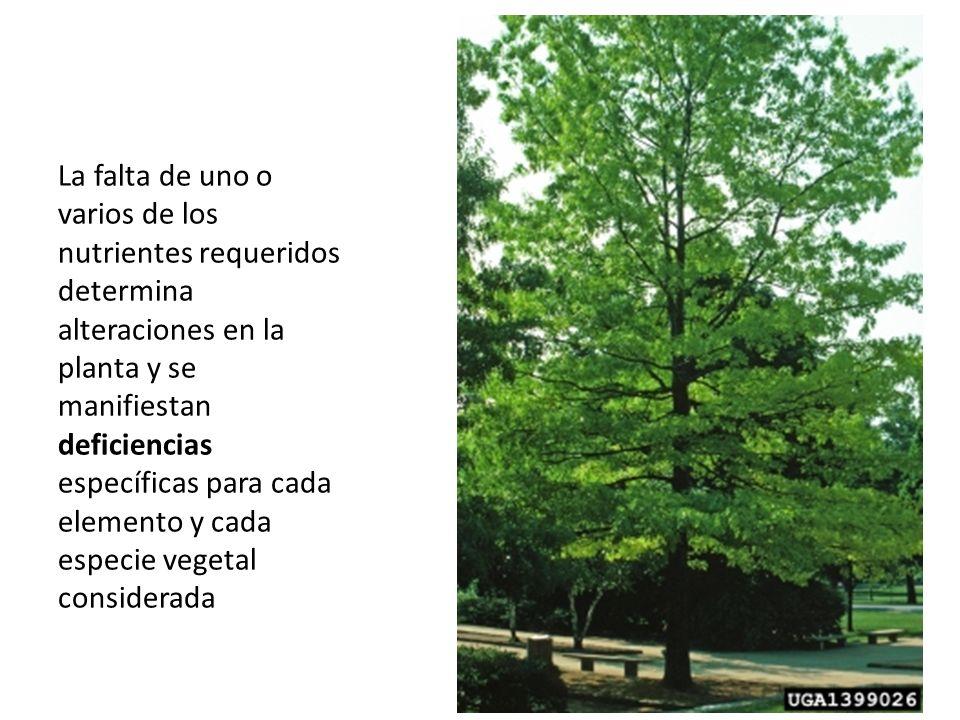 La falta de uno o varios de los nutrientes requeridos determina alteraciones en la planta y se manifiestan deficiencias específicas para cada elemento y cada especie vegetal considerada