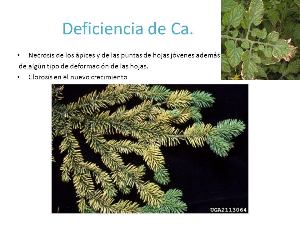 Deficiencia de Ca.