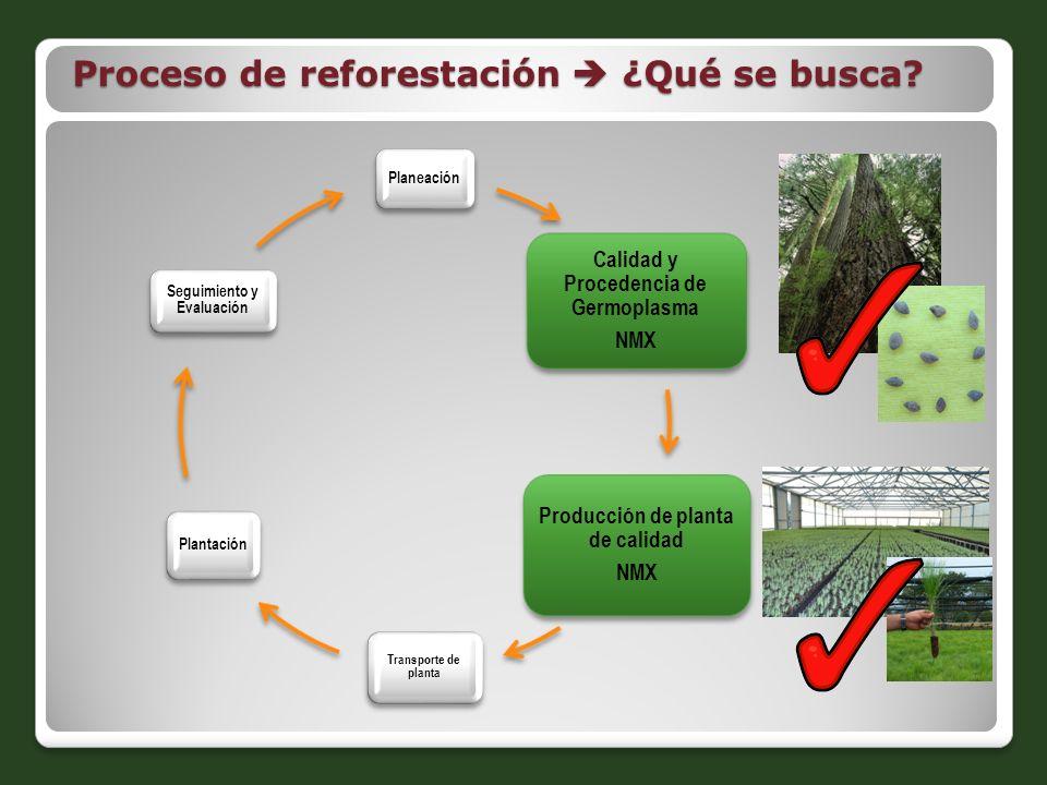 Proceso de reforestación ¿Qué se busca? Planeación Calidad y Procedencia de Germoplasma NMX Producción de planta de calidad NMX Transporte de planta P