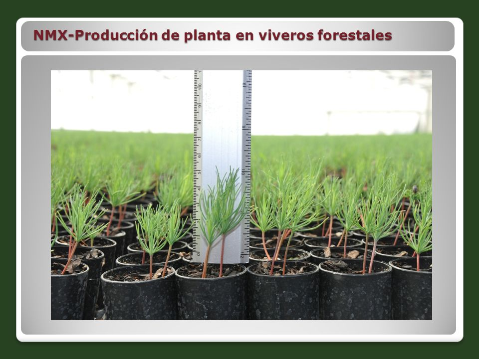NMX-Producción de planta en viveros forestales