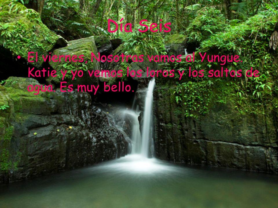 Día Seis El viernes, Nosotras vamos al Yungue. Katie y yo vemos los loros y los saltos de agua. Es muy bello.