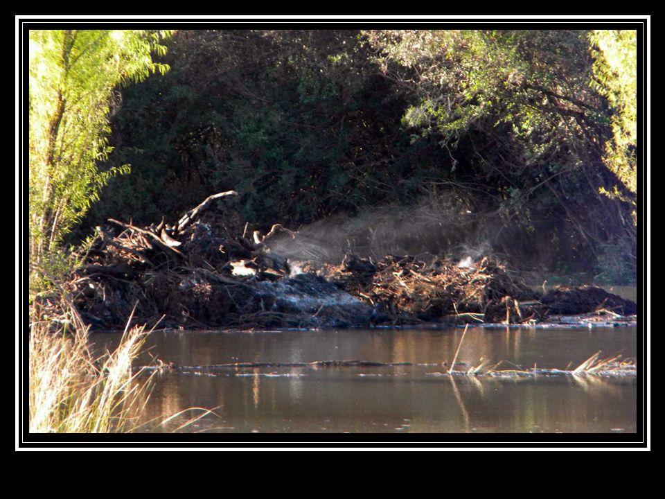 [Destrucción de los humedales del Caraballo] La siguiente foto es elocuente, muestra que RECURSOS NATURALES sólo está preocupado por RECUR$O$ FINANCIERO$