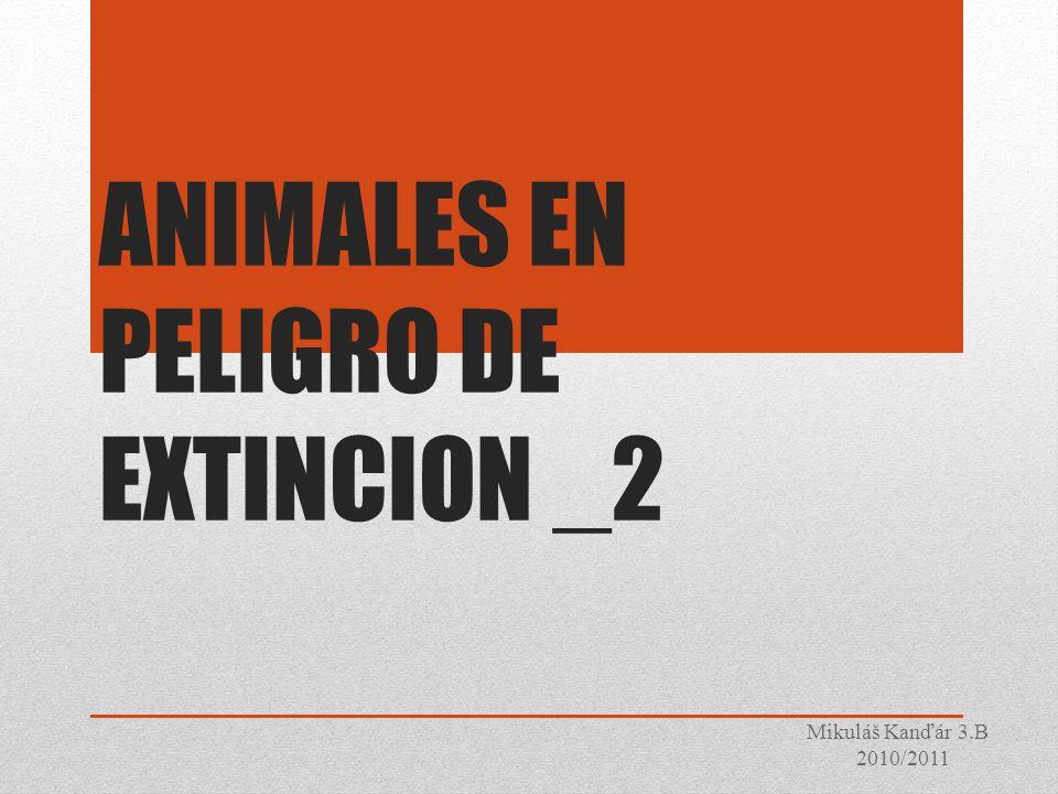 ANIMALES EN PELIGRO DE EXTINCION _2 Mikuláš Kanďár 3.B 2010/2011