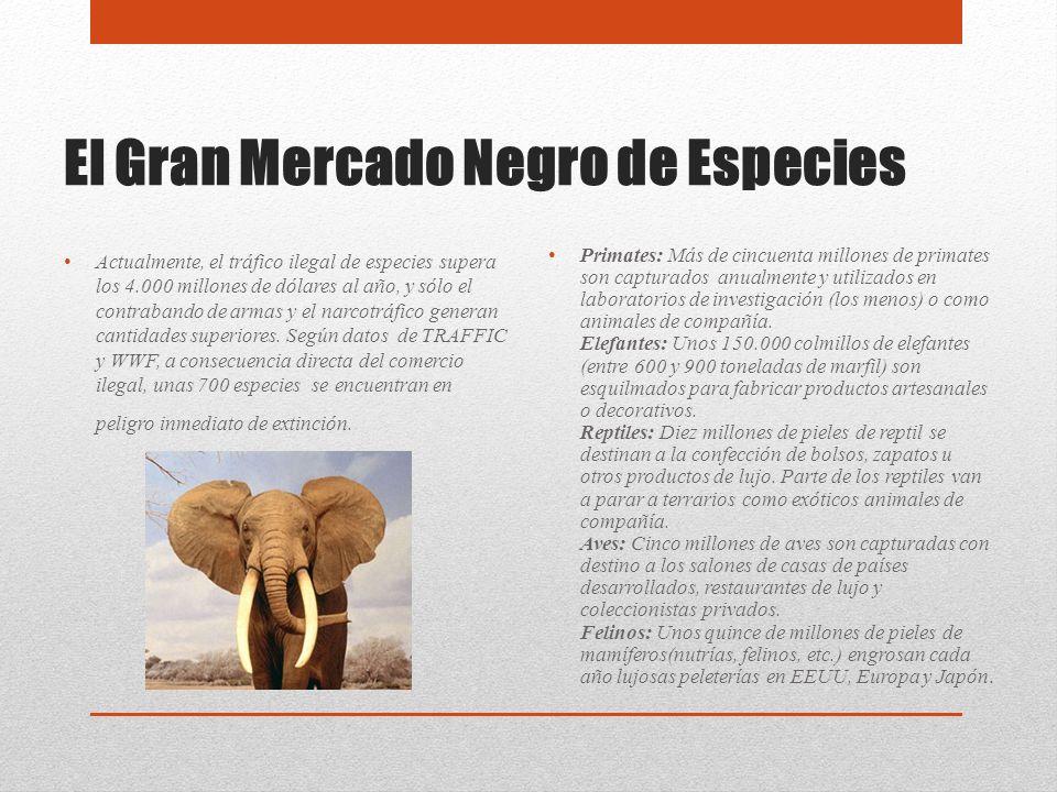 El Gran Mercado Negro de Especies Actualmente, el tráfico ilegal de especies supera los 4.000 millones de dólares al año, y sólo el contrabando de arm