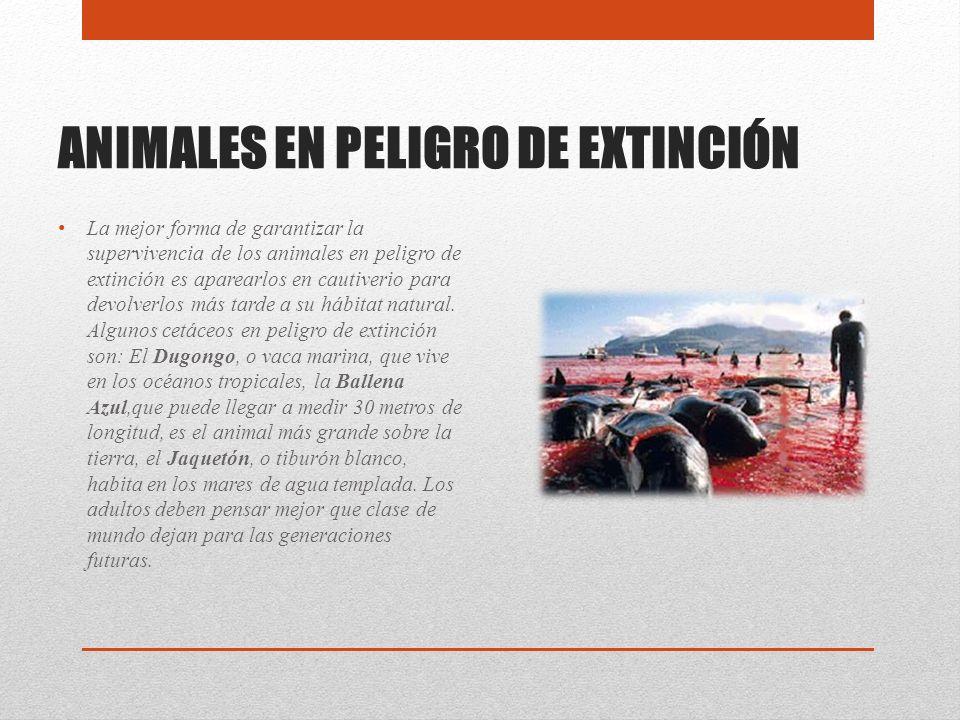 ANIMALES EN PELIGRO DE EXTINCIÓN La mejor forma de garantizar la supervivencia de los animales en peligro de extinción es aparearlos en cautiverio par