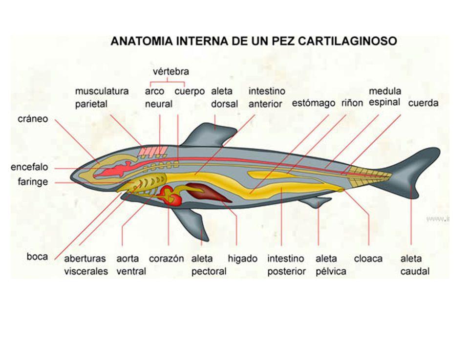 Hermosa Anatomía Externa De Los Peces Componente - Imágenes de ...