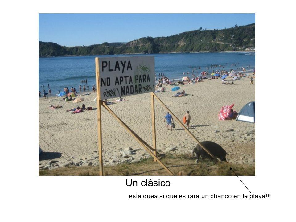 Un clásico esta guea si que es rara un chanco en la playa!!!
