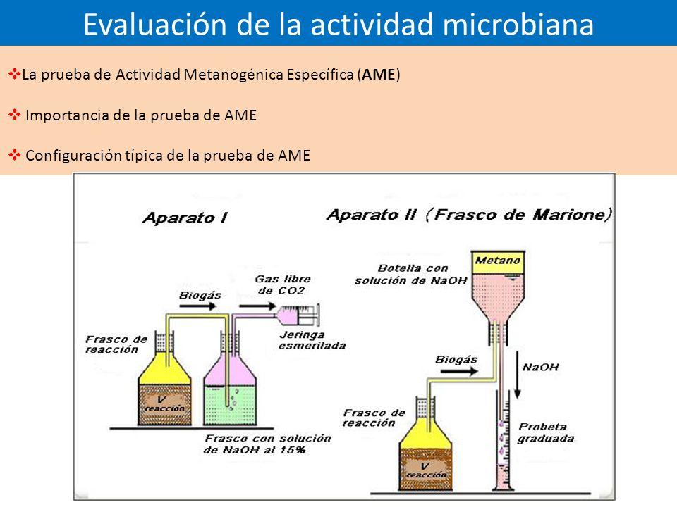 Evaluación de la actividad microbiana La prueba de Actividad Metanogénica Específica (AME) Importancia de la prueba de AME Configuración típica de la prueba de AME