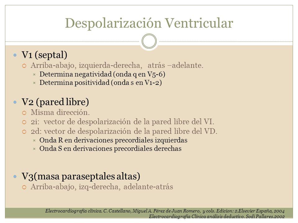 V1 (septal) Arriba-abajo, izquierda-derecha, atrás –adelante. Determina negatividad (onda q en V5-6) Determina positividad (onda s en V1-2) V2 (pared