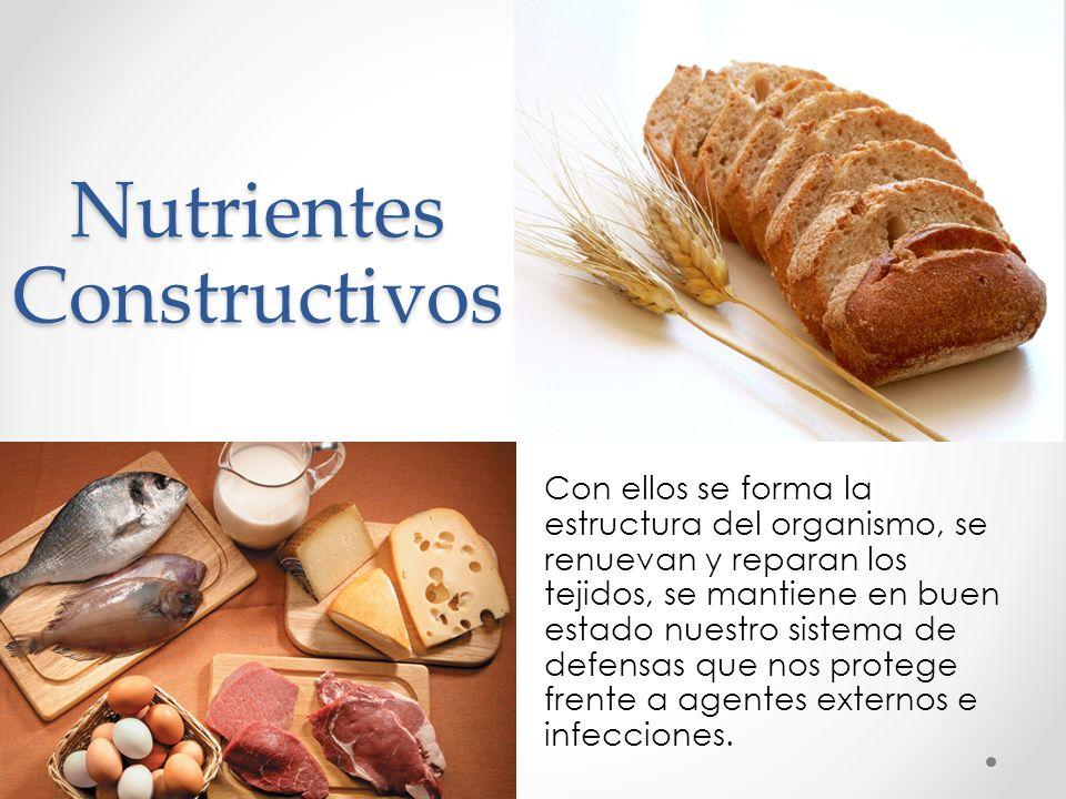 Nutrientes Constructivos Con ellos se forma la estructura del organismo, se renuevan y reparan los tejidos, se mantiene en buen estado nuestro sistema