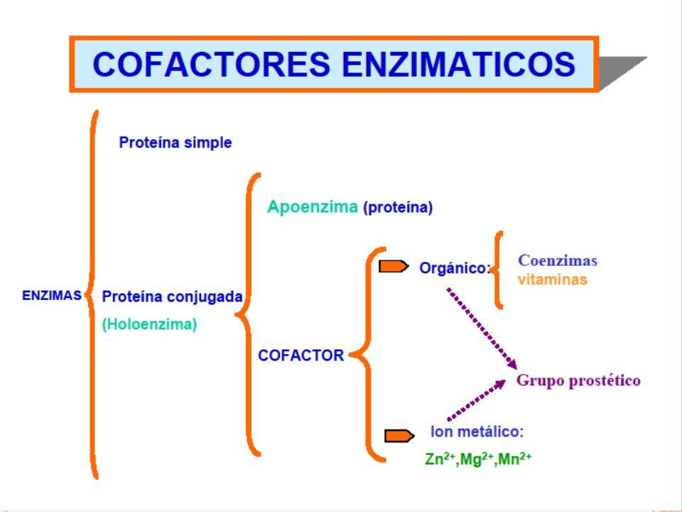 TIPOS DE ENZIMAS ENZIMAS METABOLICAS (permite que los nutrientes sean absorbidos en el torrente sanguíneo para ser utilizados en diversas funciones corporales).