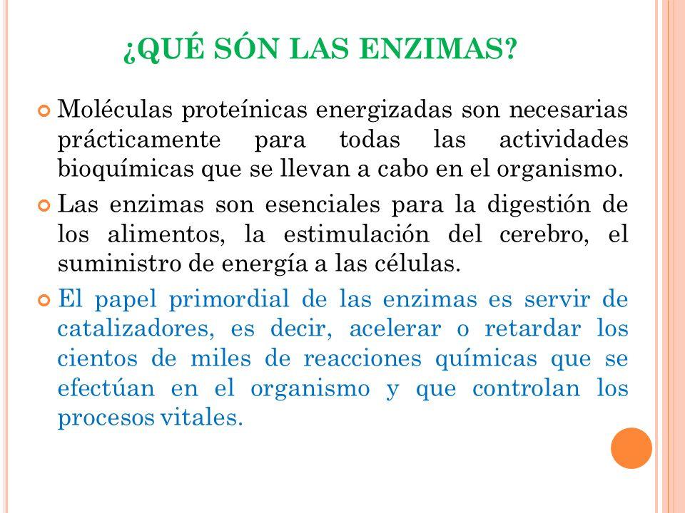 L AS ENZIMAS Y LA DIGESTIÓN ENZIMA ACTÚA SOBRE PROPORCIONASE PRODUCE EN CONDICIONES PARA QUE ACTÚE Ptialinaalmidones.Mono y disacáridos La boca (glándulas salivares) Medio moderadamente alcalino Amilasa almidones y azúcares Glucosa El estómago y páncreasestómago páncreas Medio moderadamente ácido Pepsinaproteínas Péptidos y aminoácidos El estómagoMedio muy ácido Lipasagrasas Ácidos grasos y glicerina Páncreas e intestino Medio alcalino y previa acción de las sales biliares Lactasa lactosa de la leche Glucosa y galactosa Intestino (su producción disminuye con el crecimiento) Medio ácido