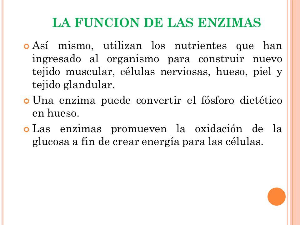 LA FUNCION DE LAS ENZIMAS Las enzimas digestivas descomponen las partículas de alimentos para que puedan almacenarse en el hígado o en los músculos.