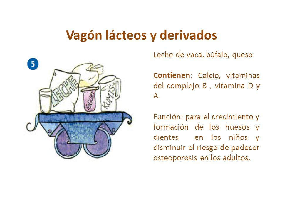 Vagón lácteos y derivados Leche de vaca, búfalo, queso Contienen: Calcio, vitaminas del complejo B, vitamina D y A. Función: para el crecimiento y for