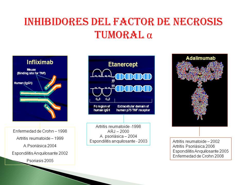INHIBIDORES DEL FACTOR DE NECROSIS TUMORAL α Enfermedad de Crohn – 1998 Artritis reumatoide – 1999 A.Psoriásica 2004 Espondilitis Anquilosante 2002 Psoriasis 2005 Artritis reumatoide -1998 ARJ – 2000 A.
