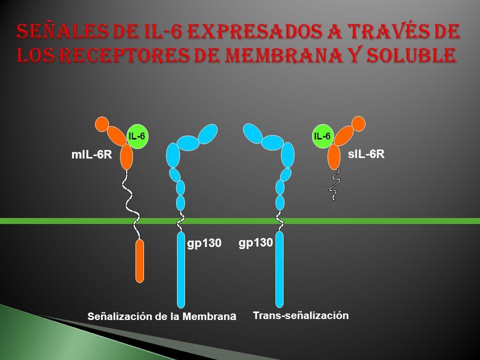 mIL-6R gp130 IL-6 Señalización de la Membran a Trans-señalización sIL-6R gp130 IL-6