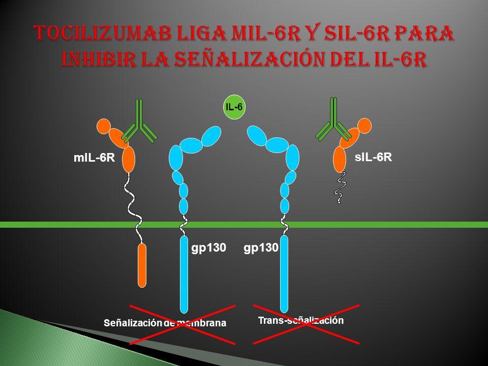 mIL-6R gp130 Señalización de membrana Trans-señalización sIL-6R gp130 IL-6