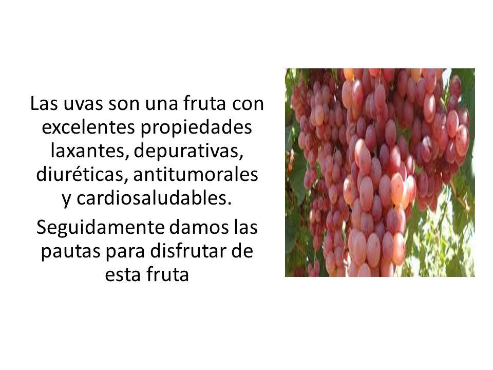 Las uvas son una fruta con excelentes propiedades laxantes, depurativas, diuréticas, antitumorales y cardiosaludables.
