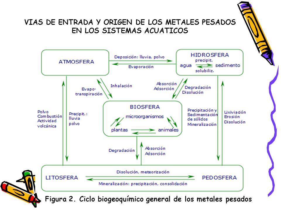 VIAS DE ENTRADA Y ORIGEN DE LOS METALES PESADOS EN LOS SISTEMAS ACUATICOS En los sistemas acuáticos continentales (ríos, lagos, embalses, etc.) los metales pesados son introducidos como resultado de la acción de procesos naturales y antropogénicos.
