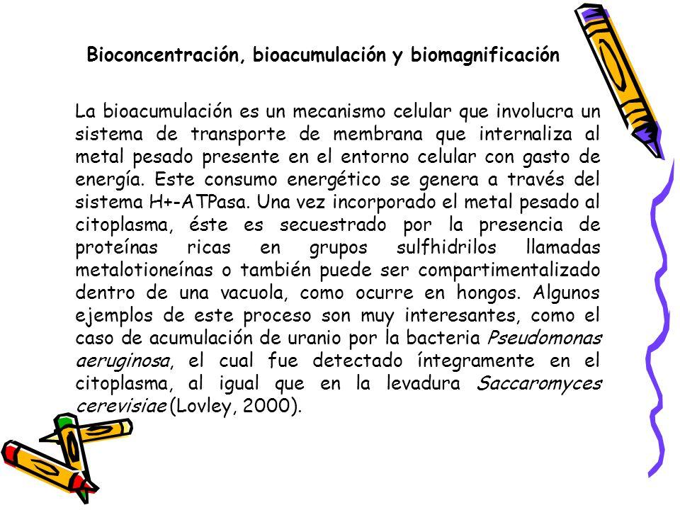 Bioconcentración, bioacumulación y biomagnificación La bioacumulación de sustancias en organismos acuáticos puede entrañar efectos tóxicos a largo plazo incluso cuando la concentración de esas sustancias en el agua sea baja.