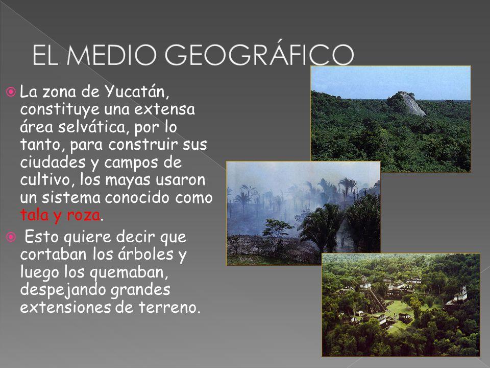 La zona de Yucatán, constituye una extensa área selvática, por lo tanto, para construir sus ciudades y campos de cultivo, los mayas usaron un sistema