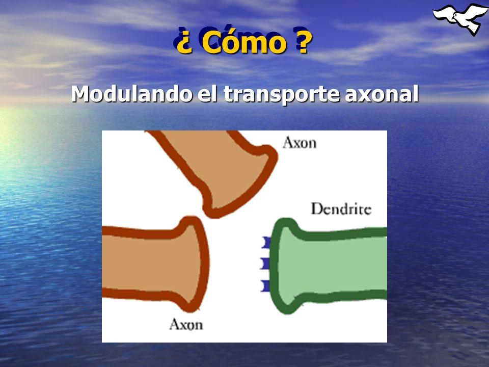 Modulando el transporte axonal ¿ Cómo ?