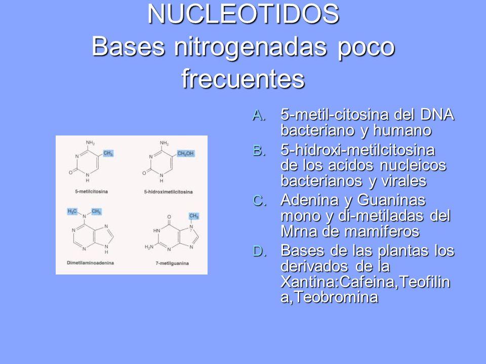 NUCLEOTIDOS Bases nitrogenadas poco frecuentes A. 5-metil-citosina del DNA bacteriano y humano B. 5-hidroxi-metilcitosina de los acidos nucleicos bact