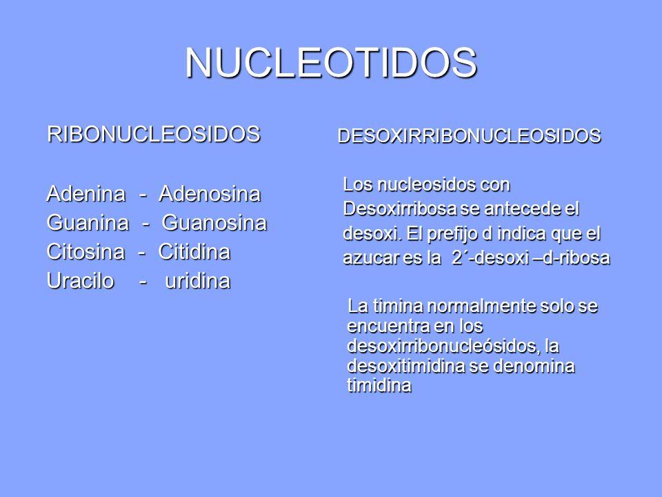 NUCLEOTIDOS RIBONUCLEOSIDOS RIBONUCLEOSIDOS Adenina - Adenosina Adenina - Adenosina Guanina - Guanosina Guanina - Guanosina Citosina - Citidina Citosi