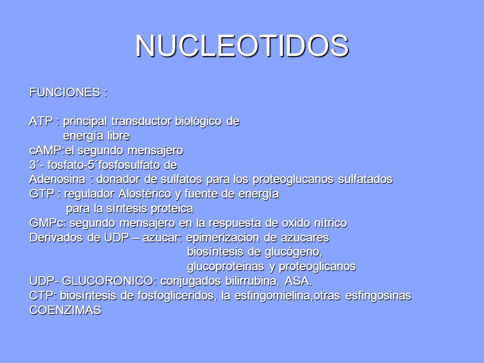 NUCLEOTIDOS FUNCIONES : ATP : principal transductor biológico de energía libre energía libre cAMP:el segundo mensajero 3´- fosfato-5´fosfosulfato de A