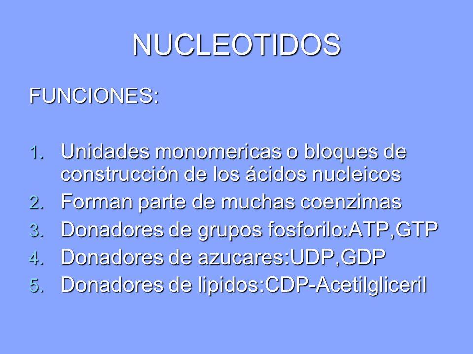 NUCLEOTIDOS FUNCIONES: 1. Unidades monomericas o bloques de construcción de los ácidos nucleicos 2. Forman parte de muchas coenzimas 3. Donadores de g
