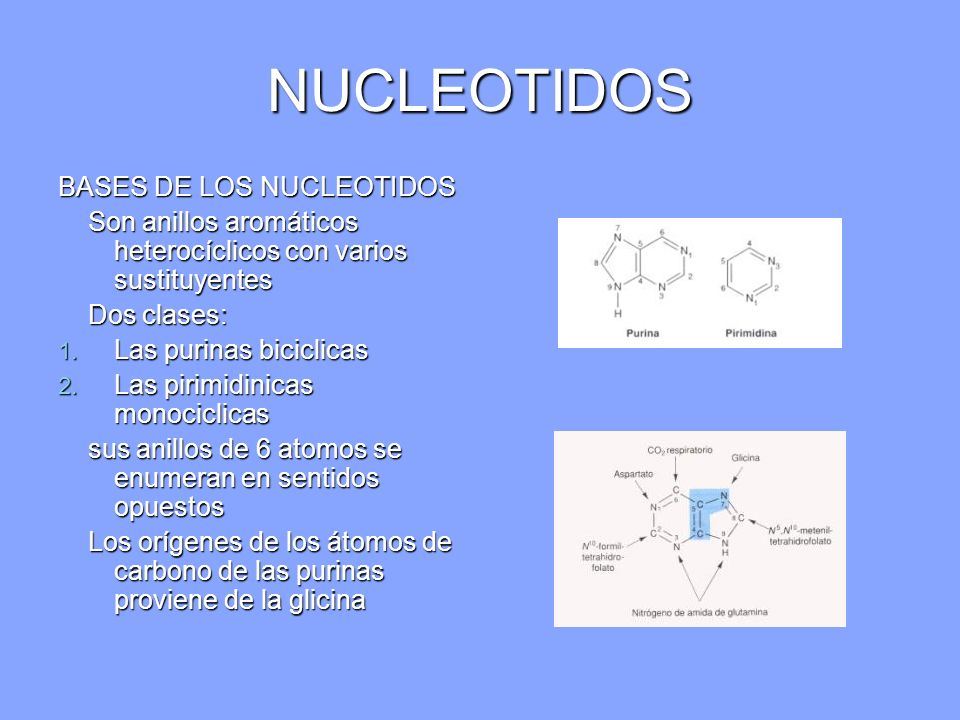 NUCLEOTIDOS Si un grupo fosfato esta unido al carbono 5´del azúcar la molécula se denomina nucleótido monofosfato Si un grupo fosfato esta unido al carbono 5´del azúcar la molécula se denomina nucleótido monofosfato Los grupos fosforilo adicionales unidos mediante enlaces ácidos anhídrido con el grupo fosforilo de un mononucleotido, forman di fosfato y trifosfato de nucleótido Los grupos fosforilo adicionales unidos mediante enlaces ácidos anhídrido con el grupo fosforilo de un mononucleotido, forman di fosfato y trifosfato de nucleótido